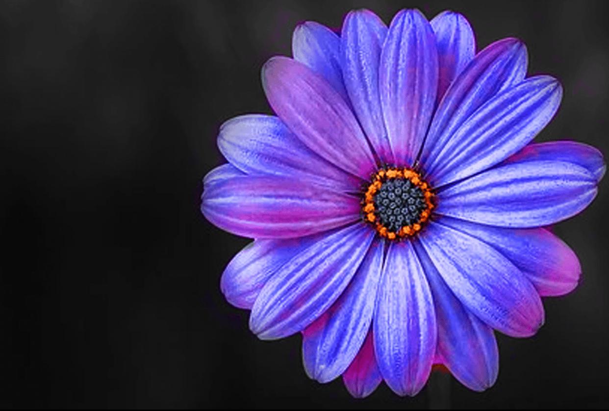 Mask flower color change - student project