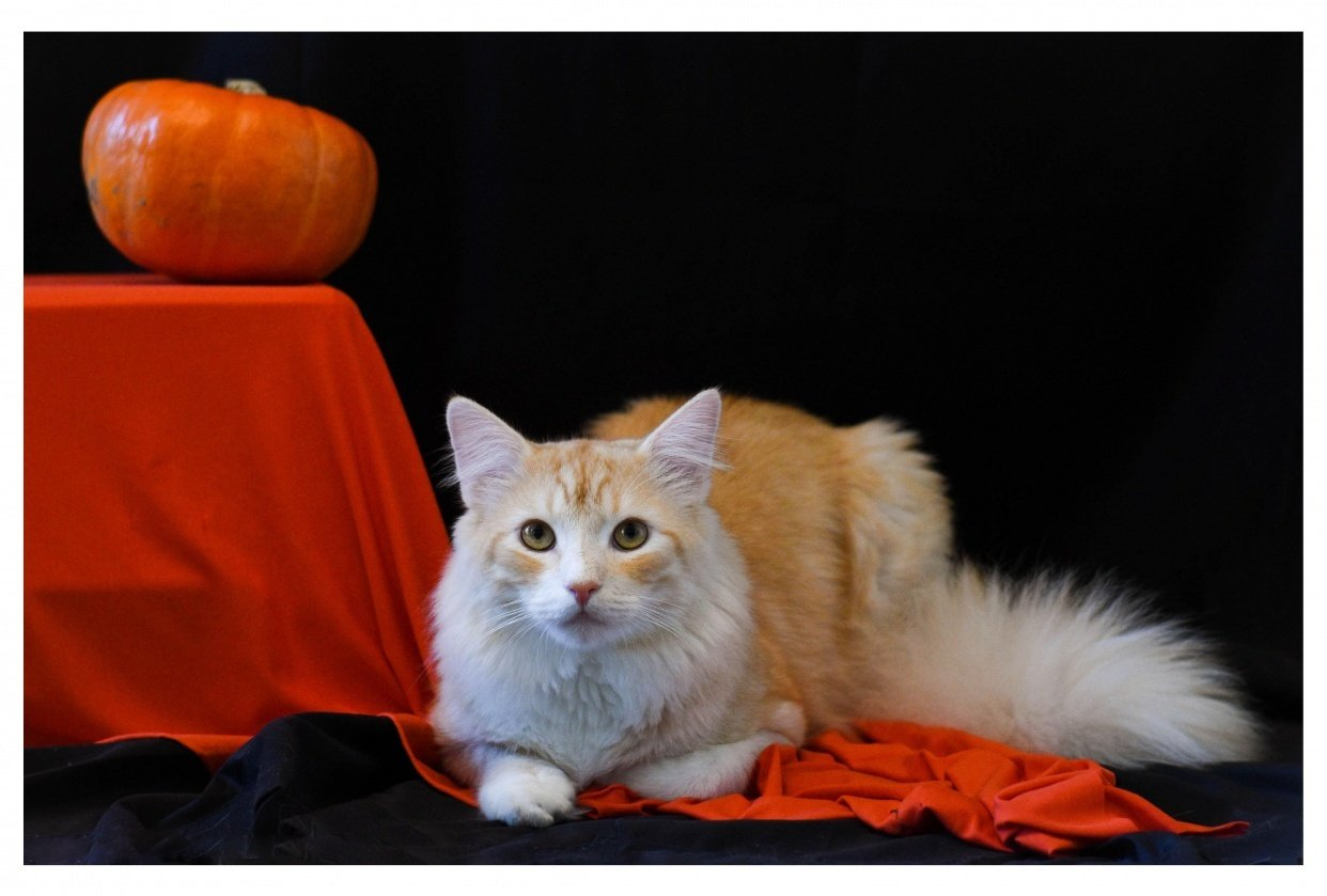 Cat Photography - student project