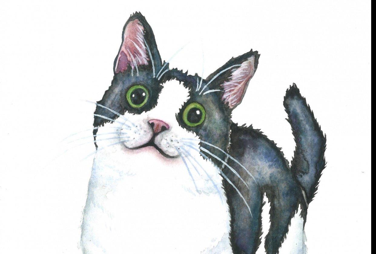 Cat Portraits! - student project