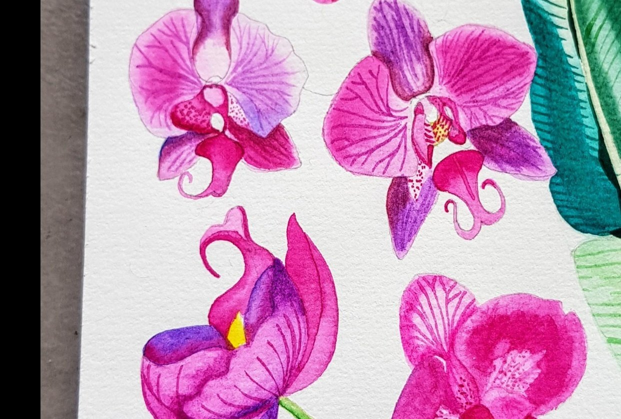 Orchids watercolours - student project