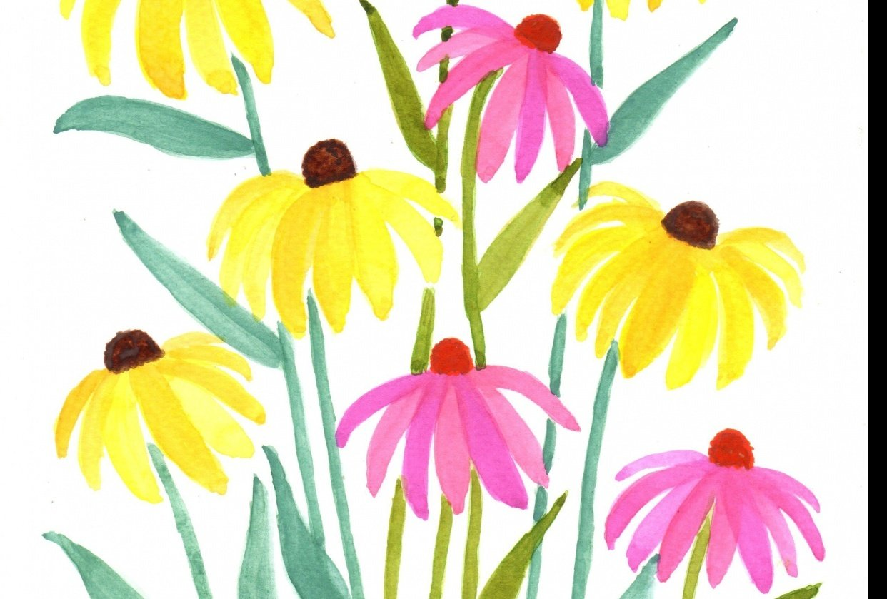 Black-eyed Susans and Coneflowers - student project
