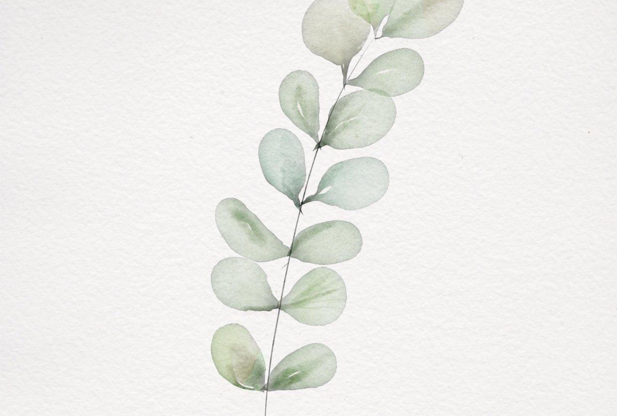 Eucalyptus - student project
