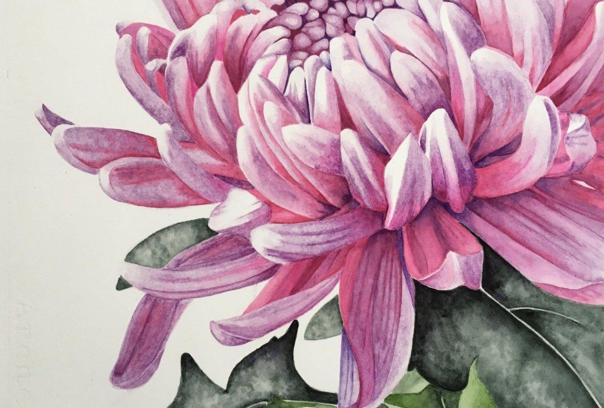Chrysanthemum - student project