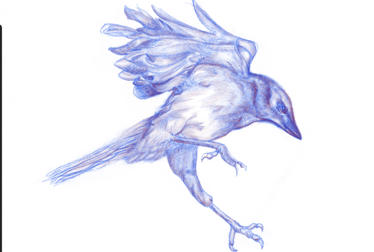 bird - student project