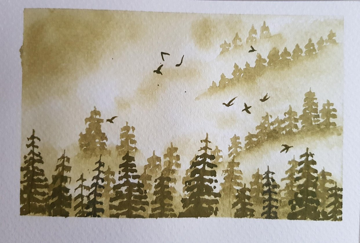 Misty pine trees - student project