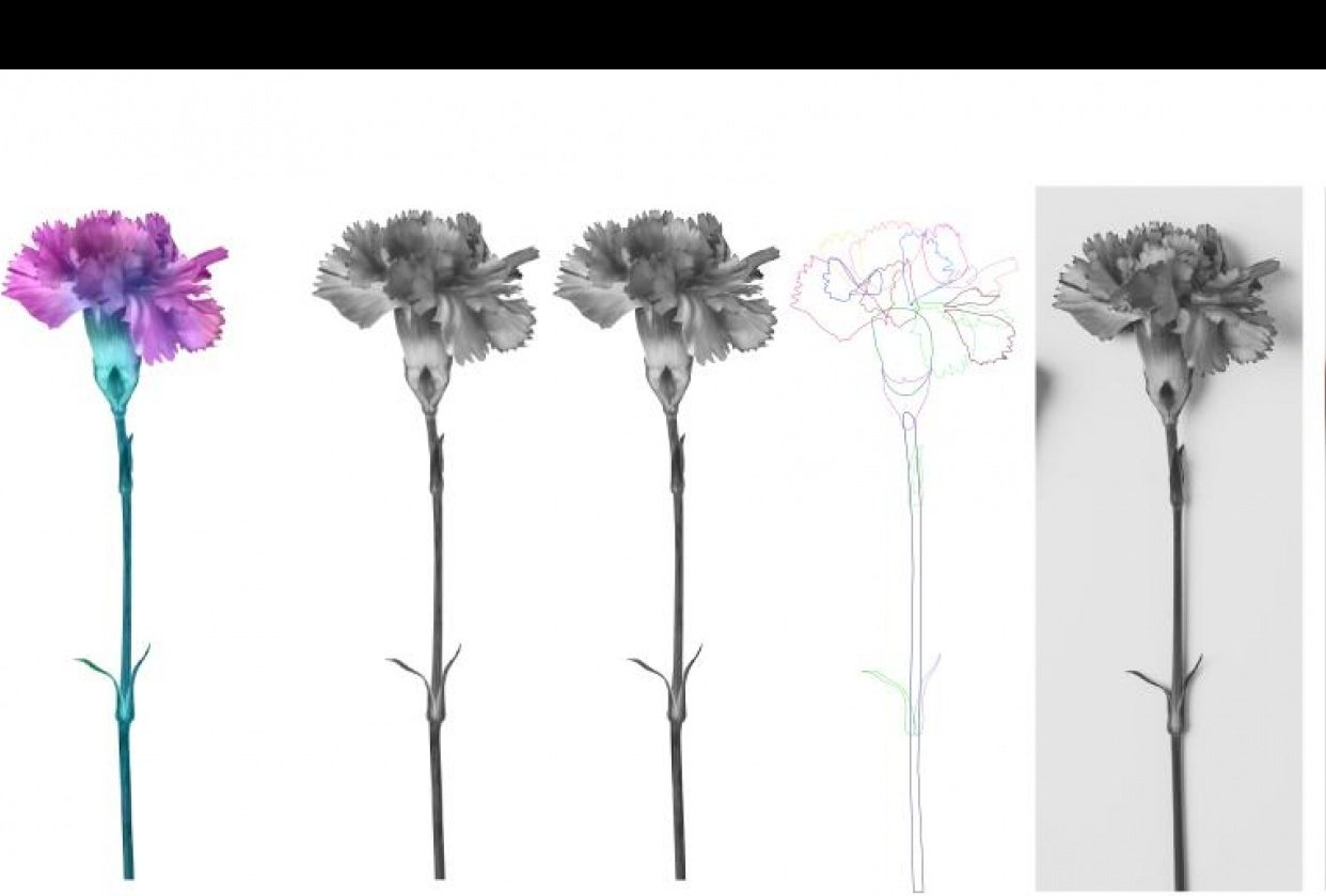 Affinity flowers - student project