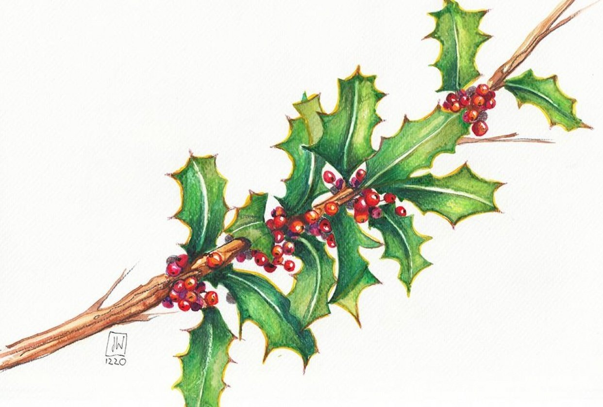 Stechpalme - Holly & Berries - student project