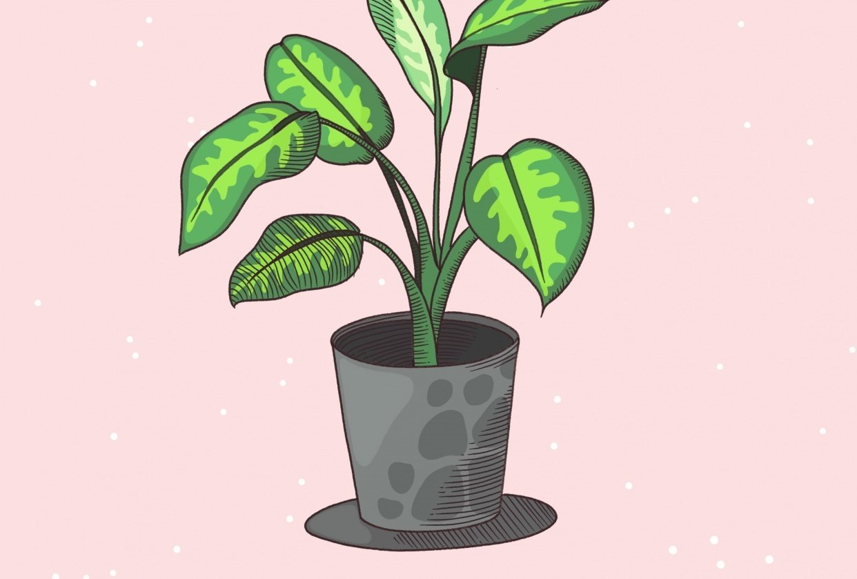 House plant - student project