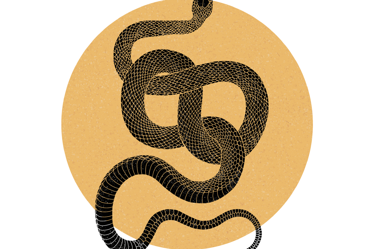 Snake Lino - student project