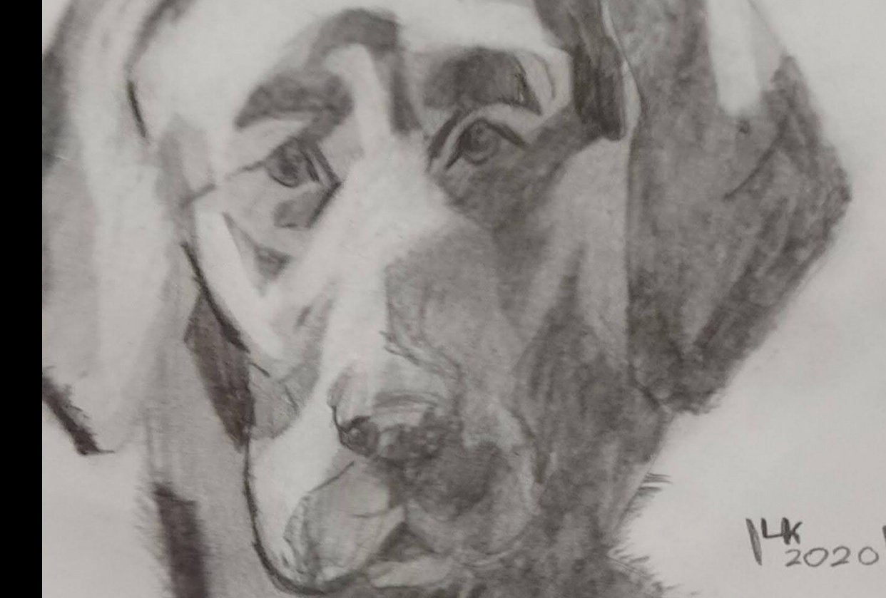 Dachshund and Labrador drawing - student project