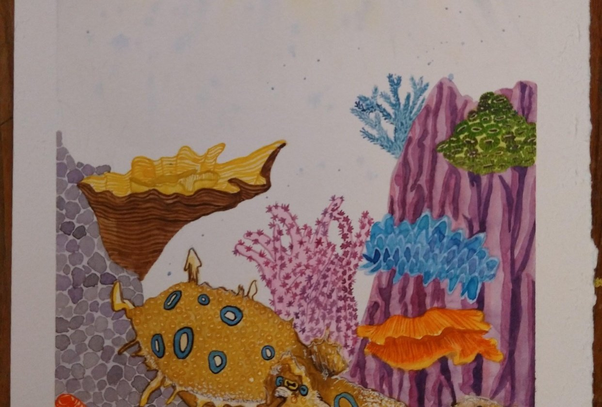Blue Ringed Octopus - student project