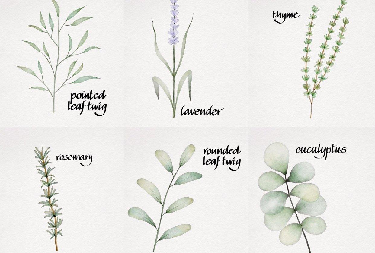 My Botanicals - student project