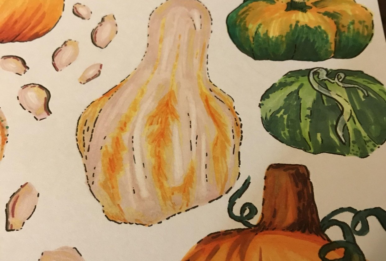 Pumpkins and Gourds - student project