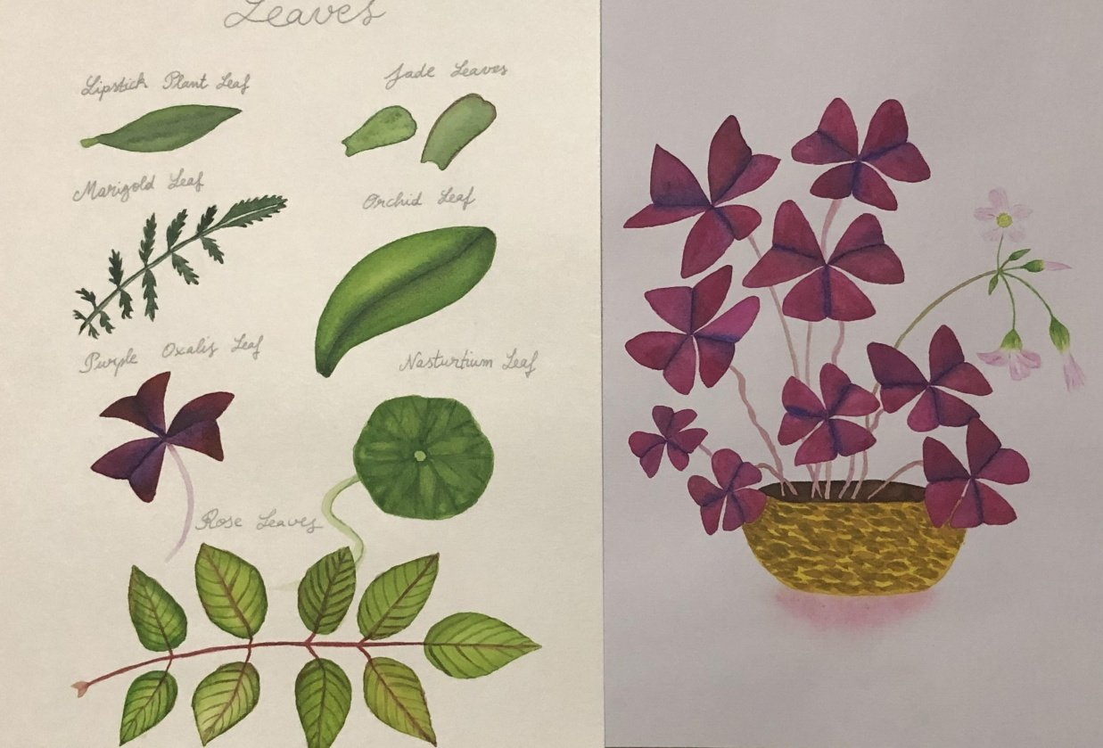 Watercolor Leaves and Oxalis - student project
