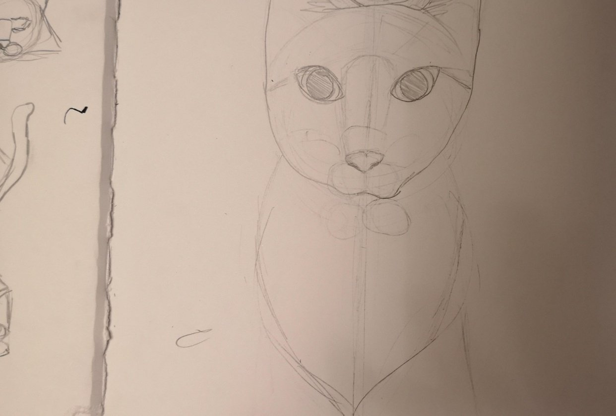 Cat project no. 1 - student project