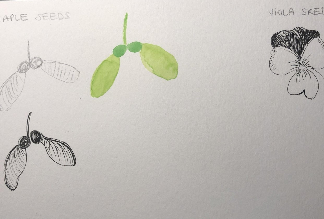 Starting a botanical sketchbook - student project