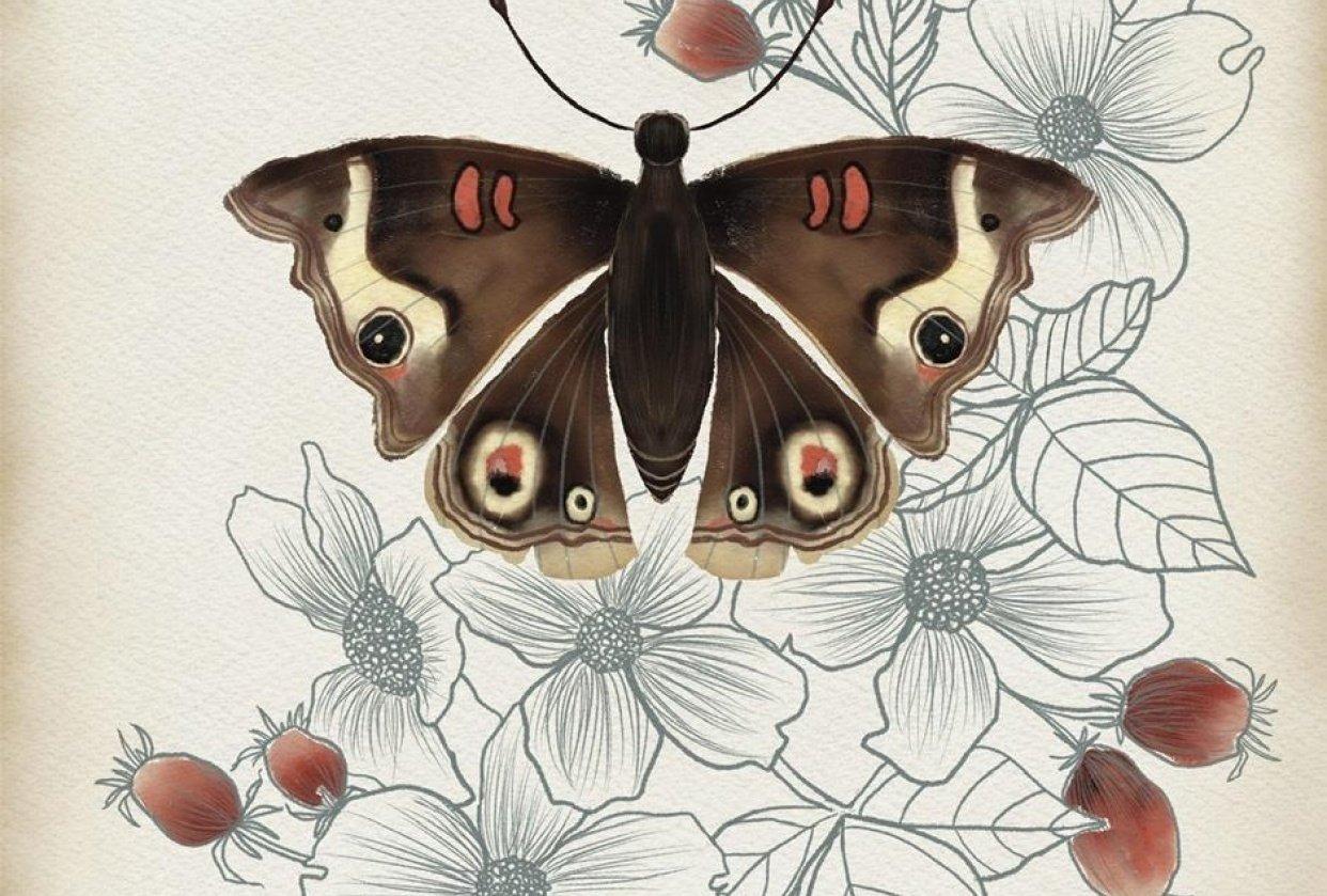 Botanical Illustration: Common Buckeye - student project