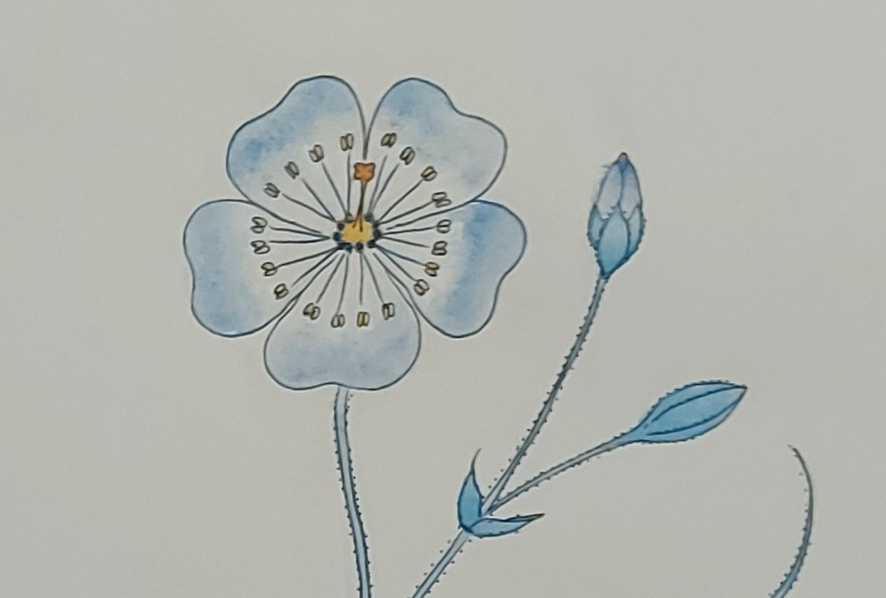 Botanical folk art - student project