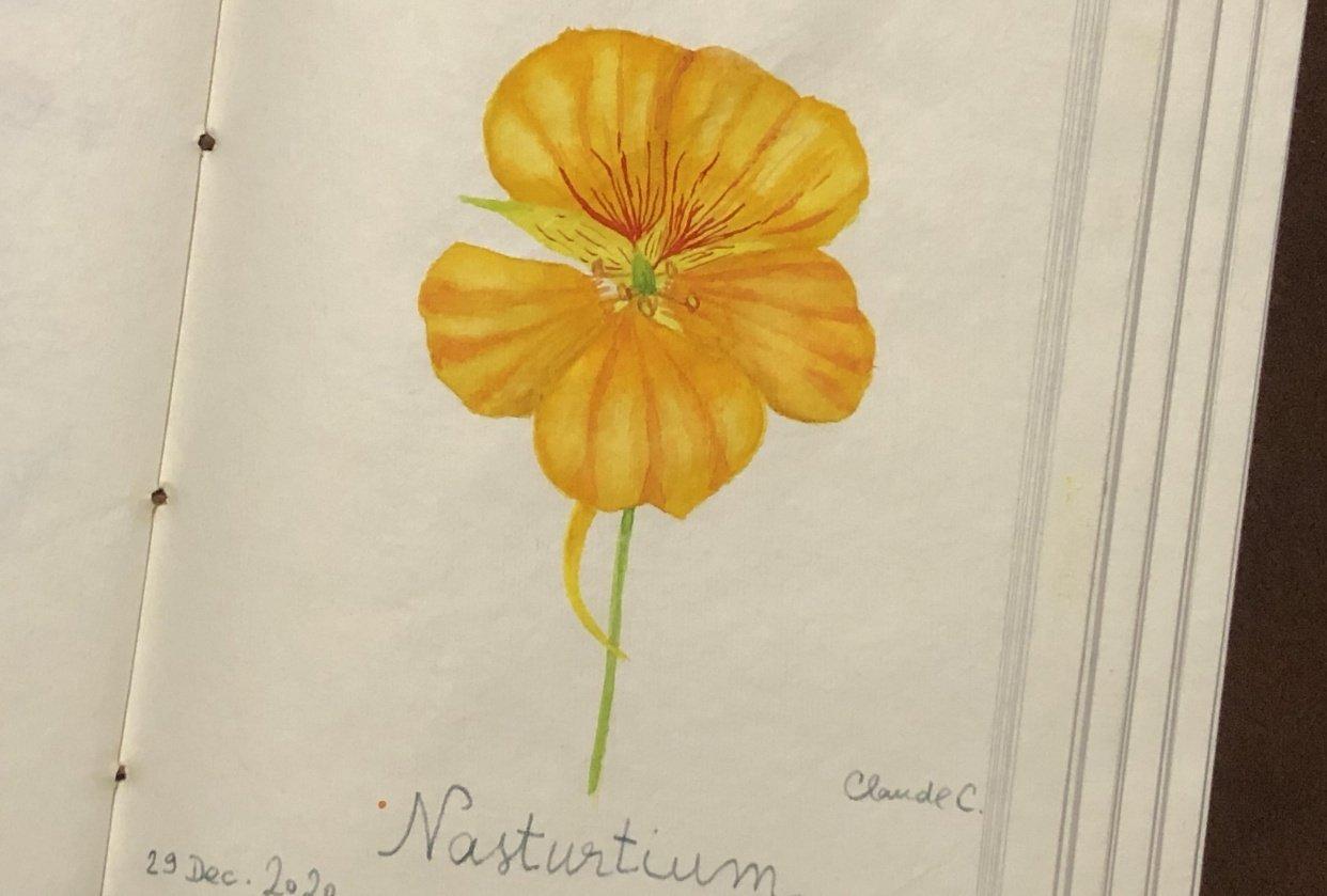 Nasturtium Flower - student project
