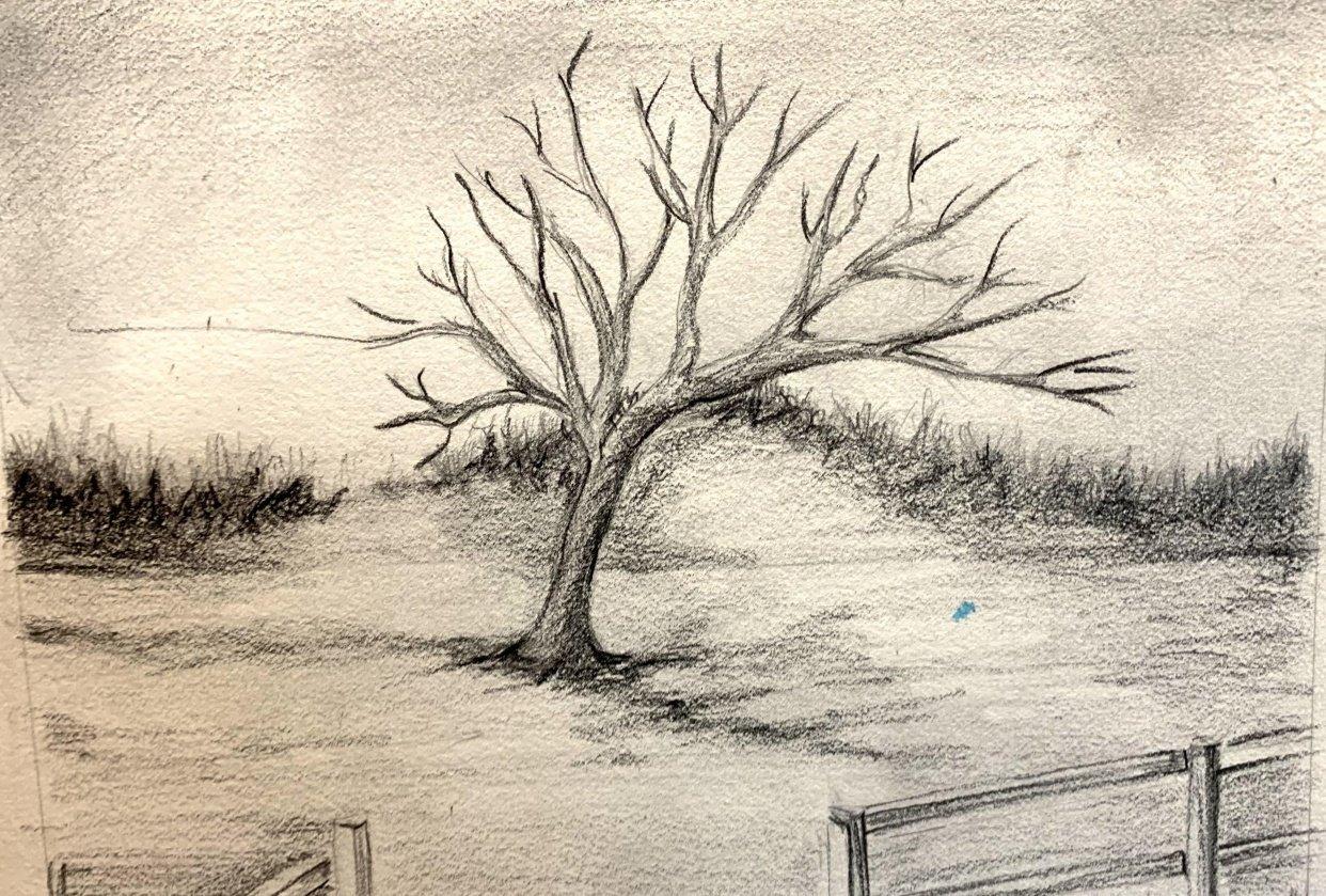 Tree practice - student project