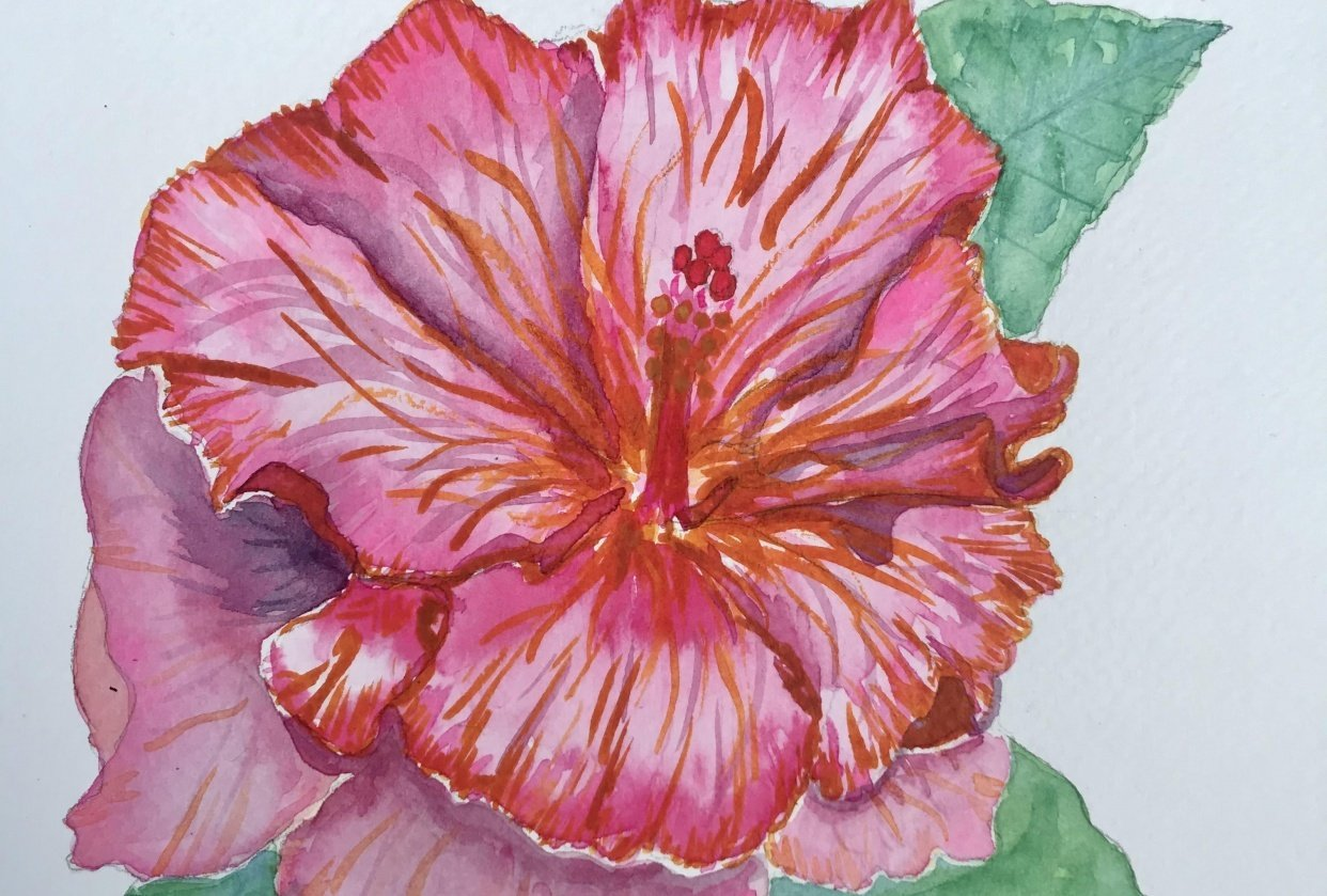 Ink and watercolour hibiscus - student project