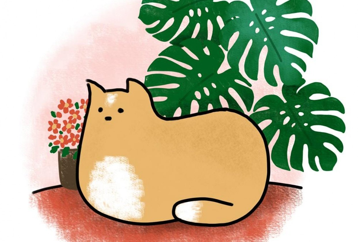 Kitty loves the plants - student project
