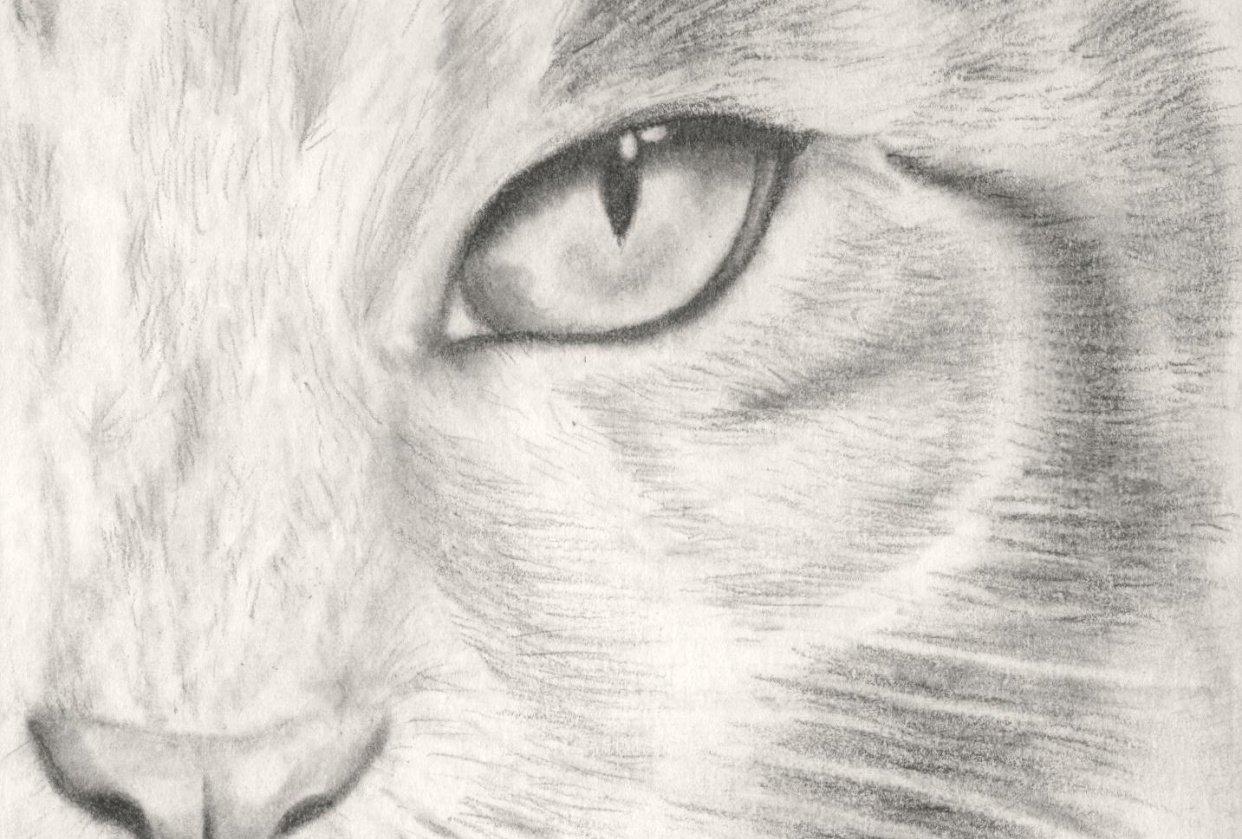 Kitten - student project