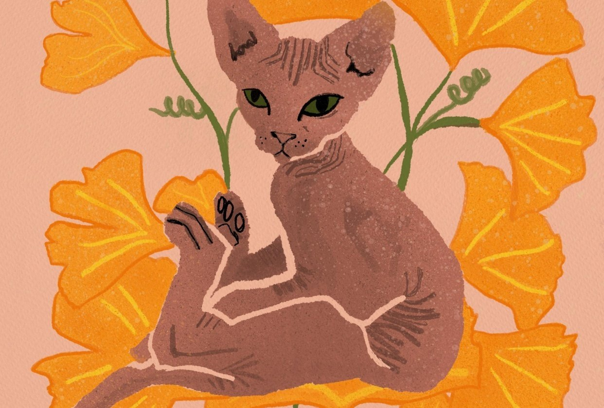 Sphynx with Ginko - student project