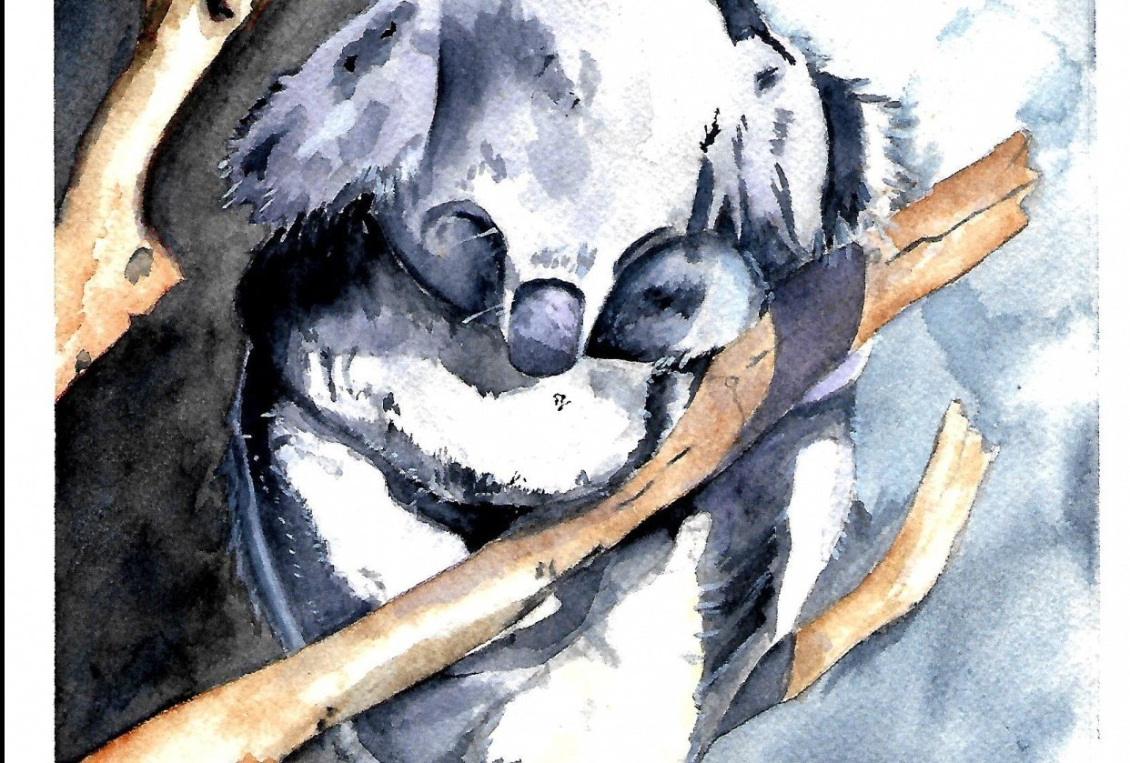 Koala - Louise De Masi - student project