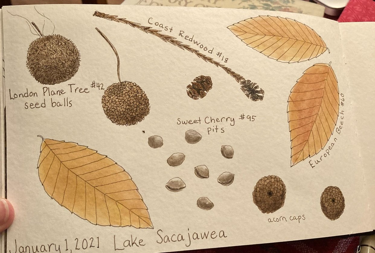 Nature Journal - student project