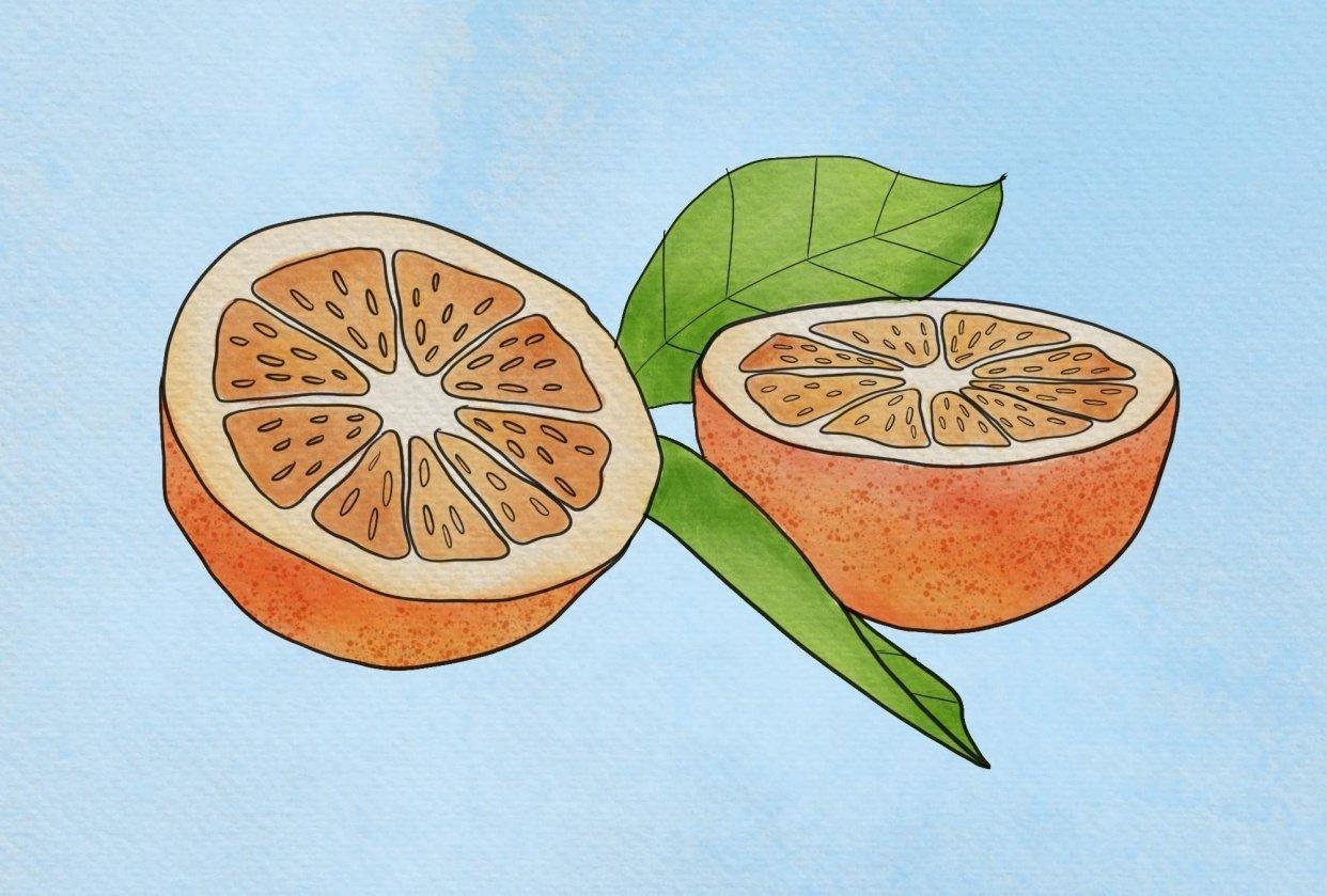 Orange fruit - student project