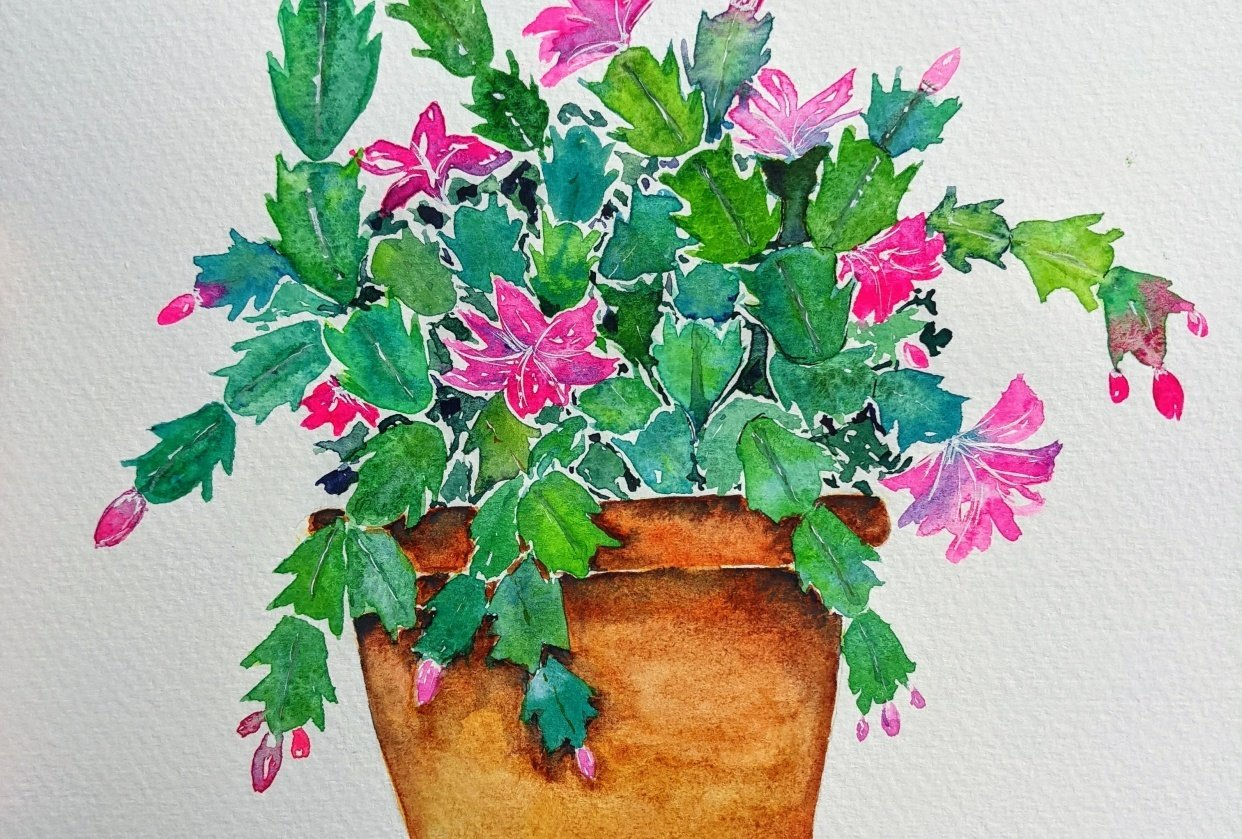 Holiday Cactus - student project