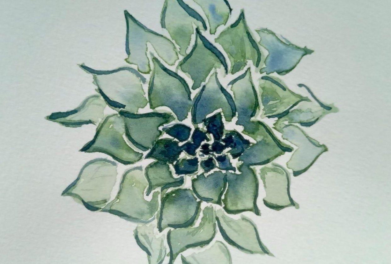 succulents - student project