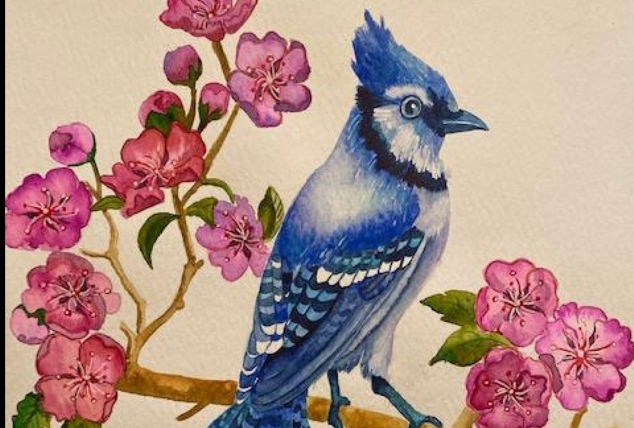 Blue Jay - student project