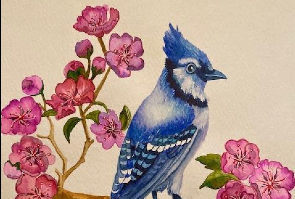 Blue Jay with Cherry Blossoms - student project