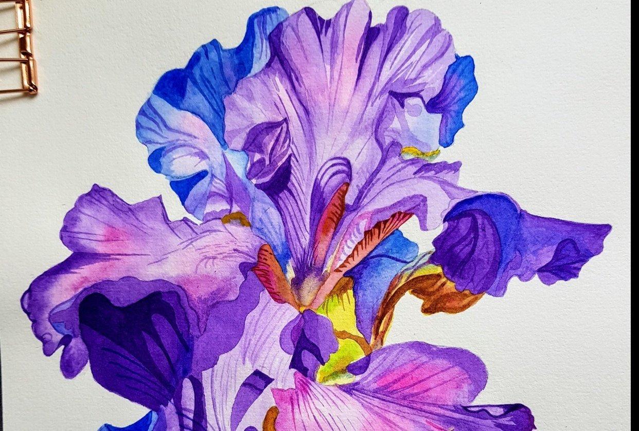 Iris flower - student project
