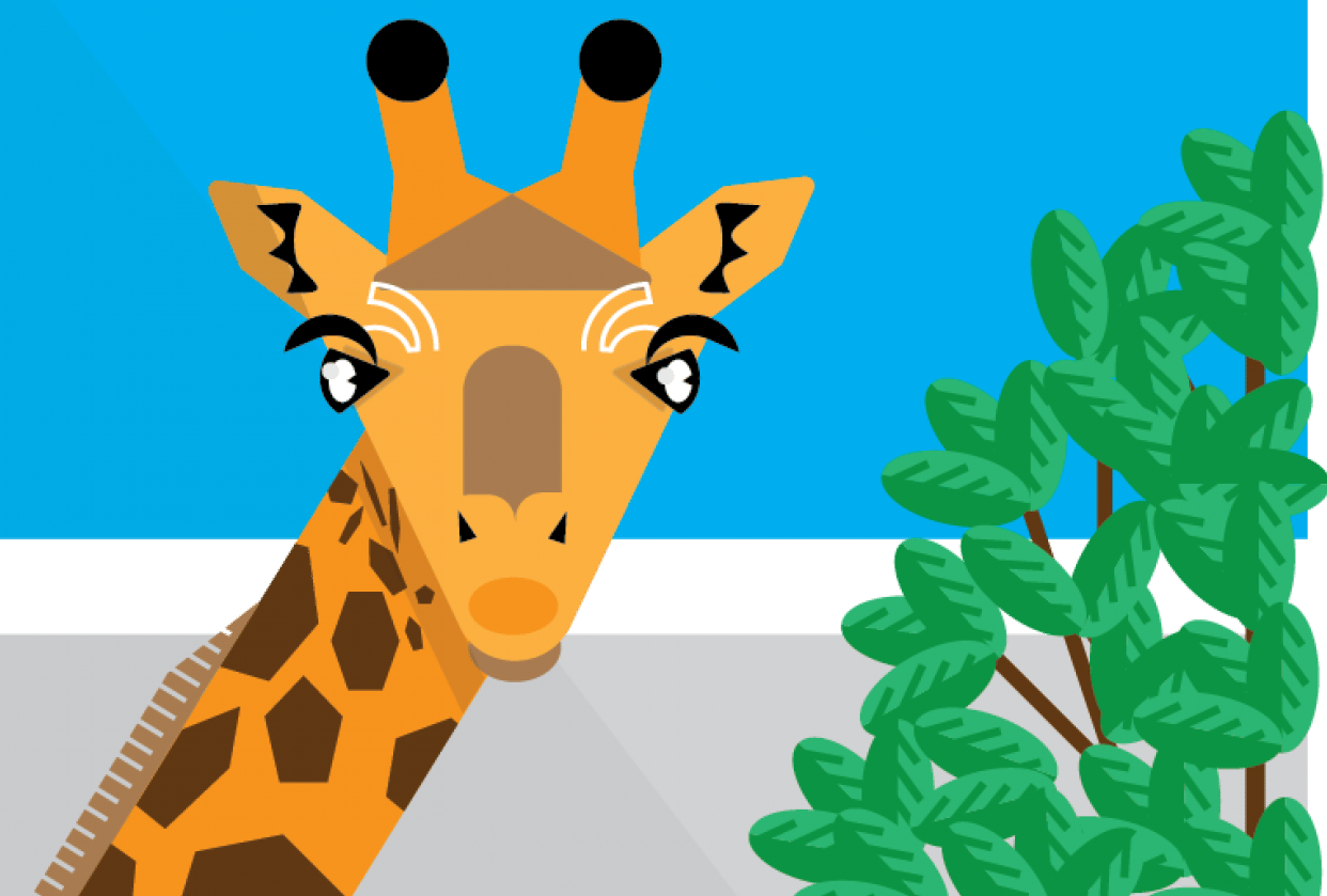 Illustrator Animal - student project