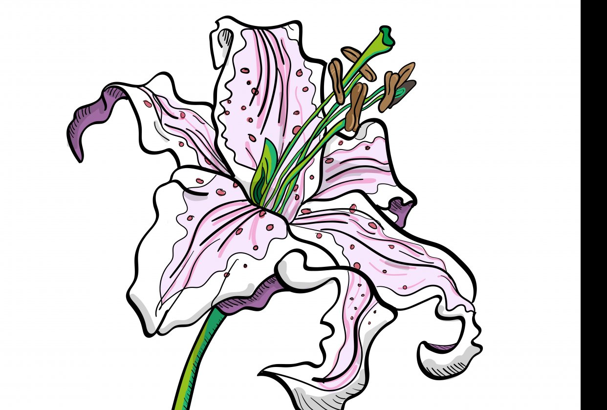 Inked Lily (first attempt) - student project