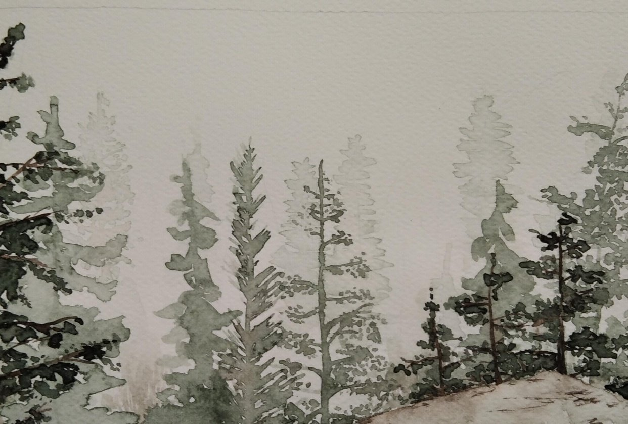 Watercolor pines - student project