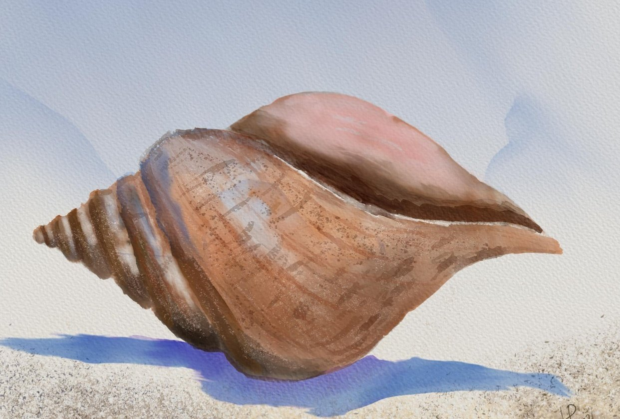Seashell - Final Project (Digital watercolor) - student project
