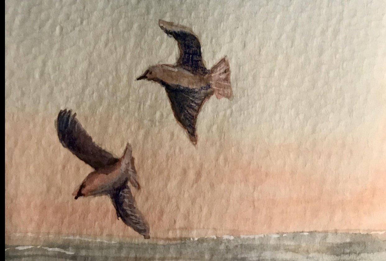 Sea & Gulls - student project