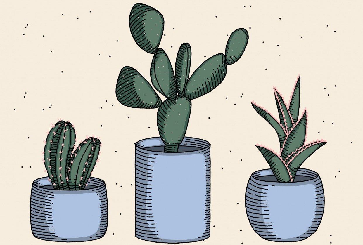 Cactus trio - student project