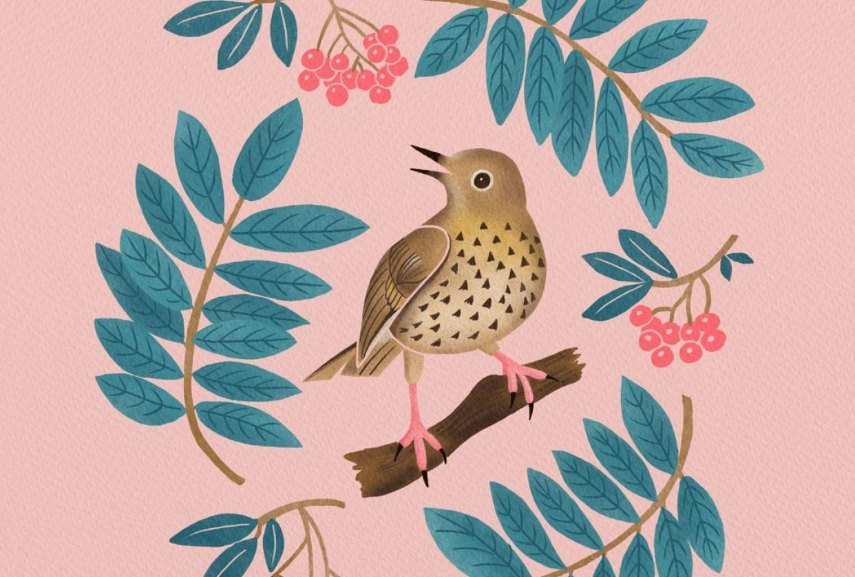 A thrush with mountain ash - student project