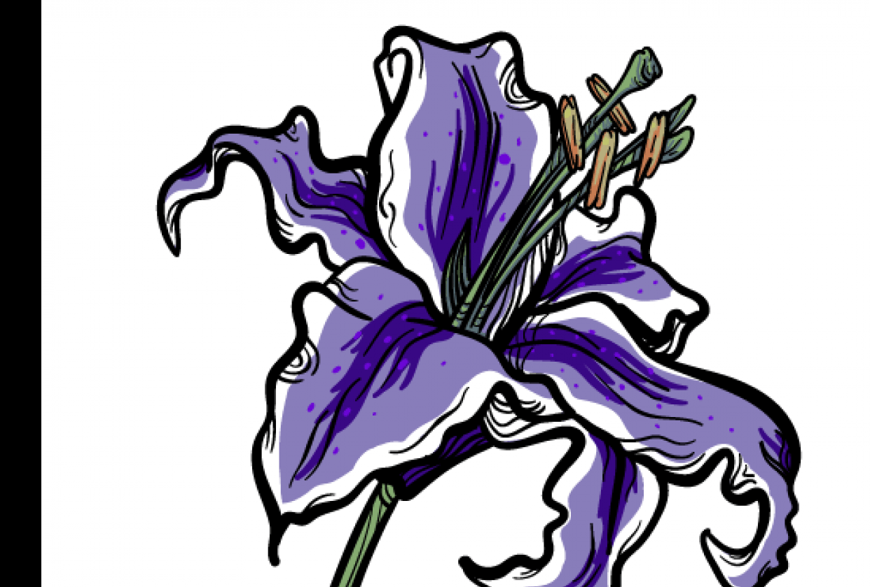 Lily exercise - student project