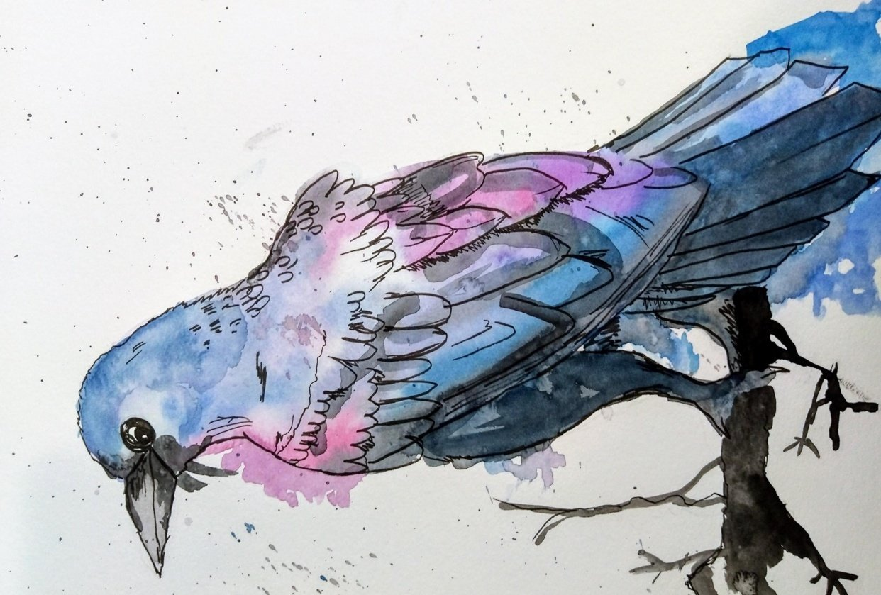 Raven Illustration in a relaxing line and watercolour wash technique - student project