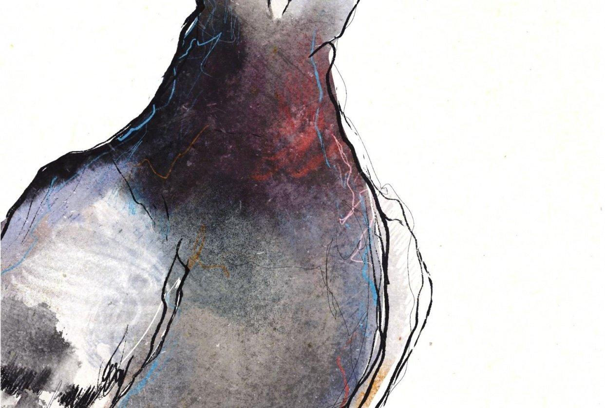 Pigeon Illo - student project