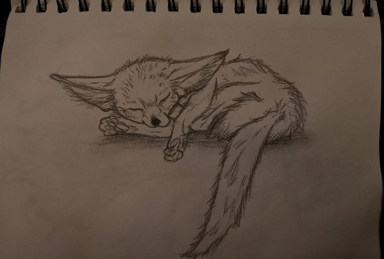 Sleeping Fennec Fox - student project