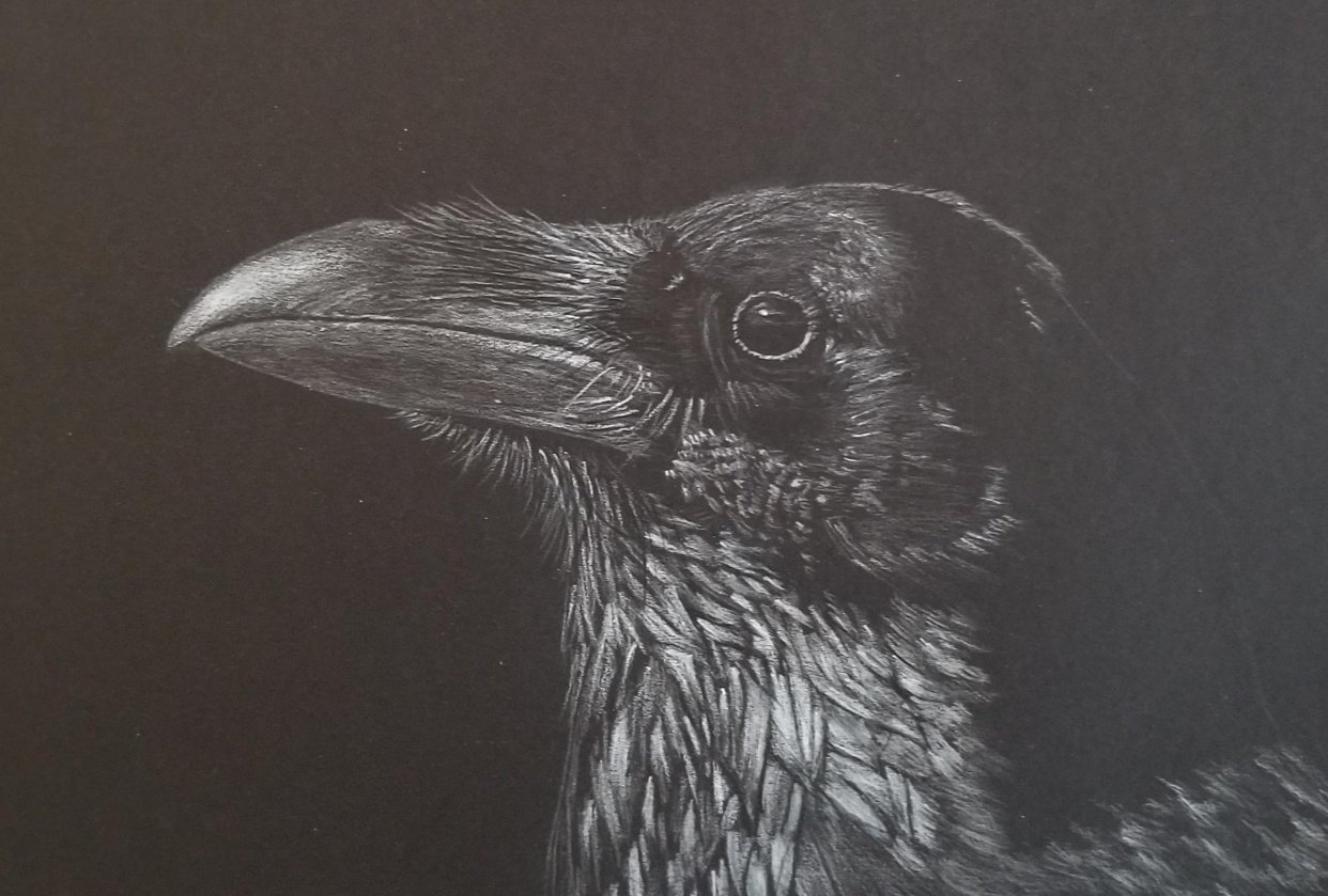 Crow with white on black - student project