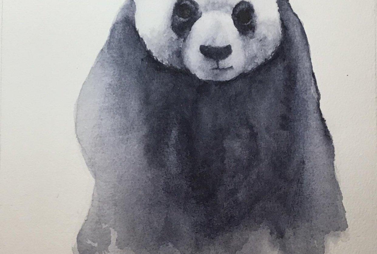 Panda tutorial from Jane Davies - student project