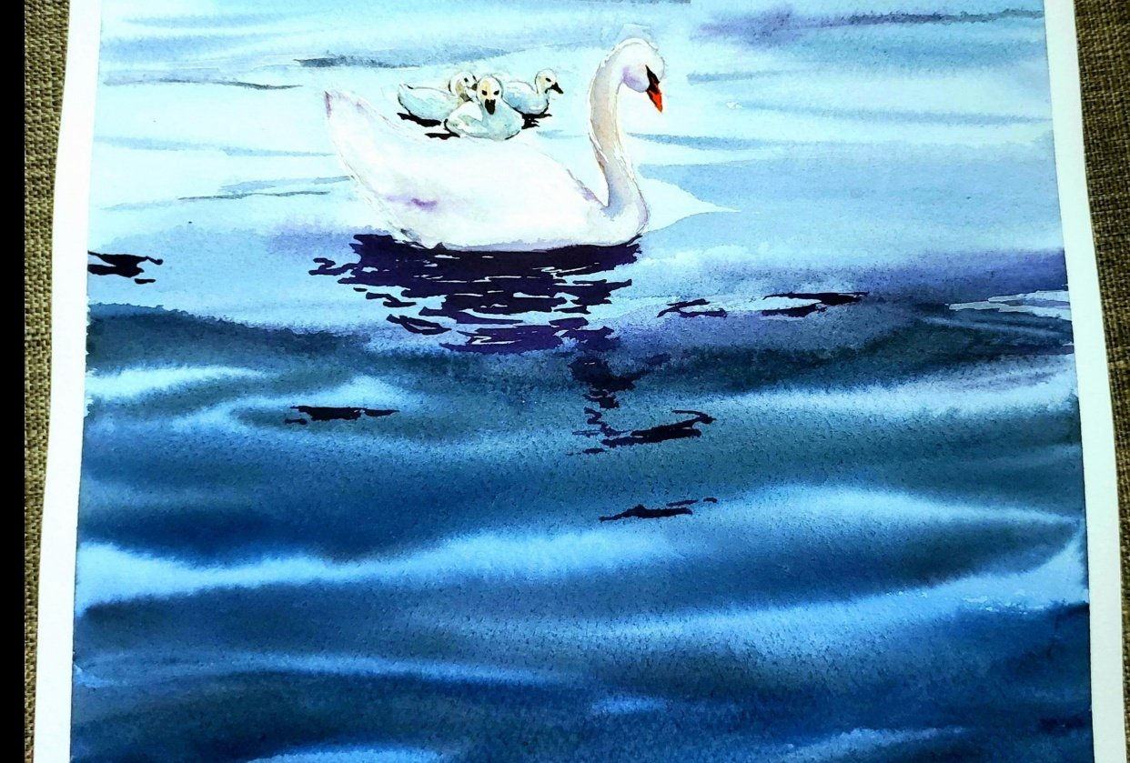 Swan and babies in lake - student project